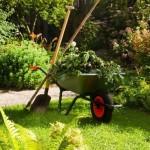 Un jardin avec moins de pollen, c'est possible