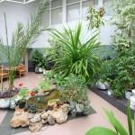 pollution intérieure : DES PLANTES À NOTRE SECOURS