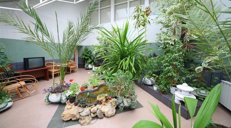 pollution int rieure des plantes notre secours innovation et technologies de la maison. Black Bedroom Furniture Sets. Home Design Ideas